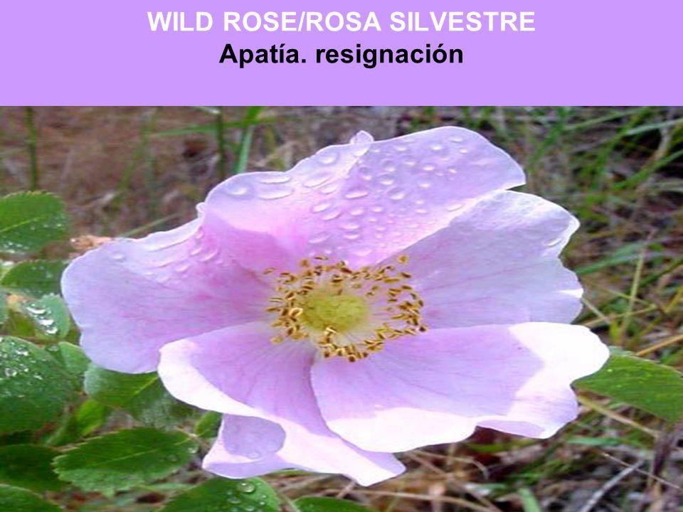 WILD ROSE/ROSA SILVESTRE Apatía. resignación