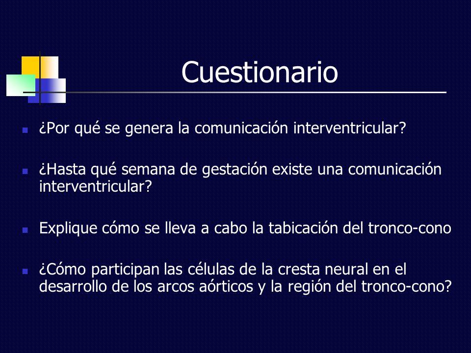 Cuestionario ¿Por qué se genera la comunicación interventricular