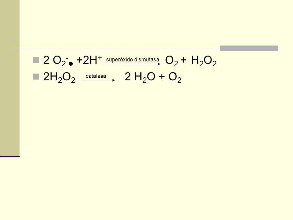 2 O2- +2H+ superóxido dismutasa O2 + H2O2