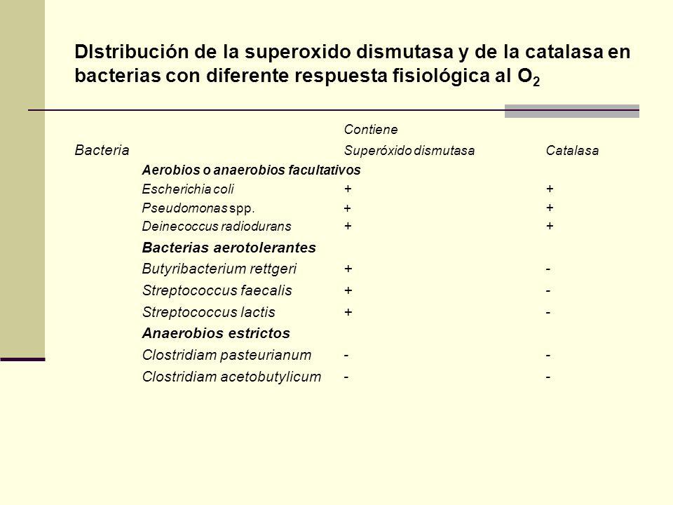 Dlstribución de la superoxido dismutasa y de la catalasa en bacterias con diferente respuesta fisiológica al O2