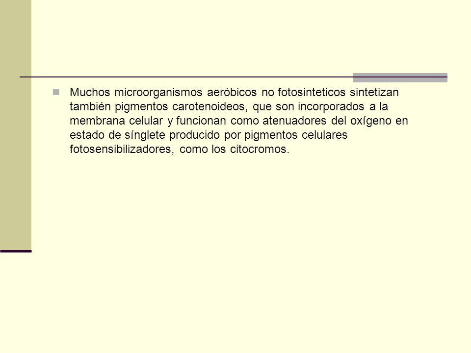 Muchos microorganismos aeróbicos no fotosinteticos sintetizan también pigmentos carotenoideos, que son incorporados a la membrana celular y funcionan como atenuadores del oxígeno en estado de sínglete producido por pigmentos celulares fotosensibilizadores, como los citocromos.