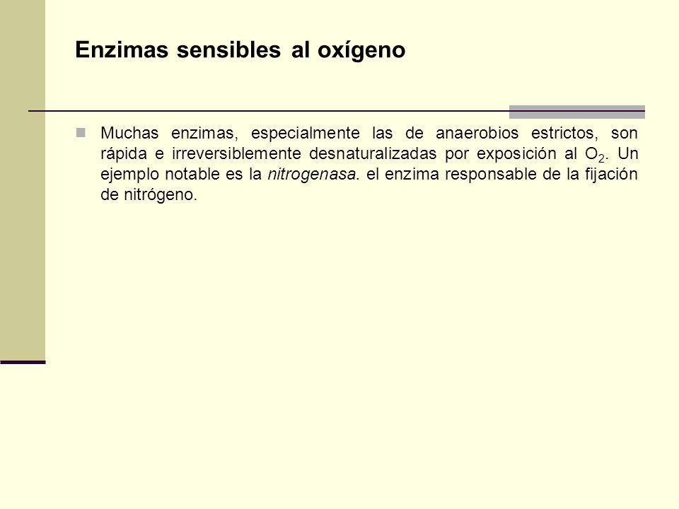 Enzimas sensibles al oxígeno