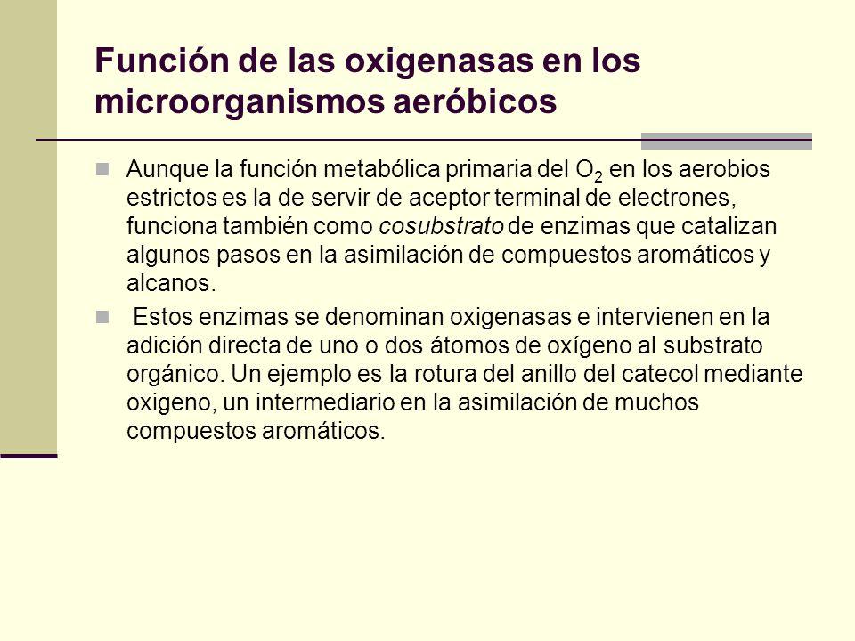 Función de las oxigenasas en los microorganismos aeróbicos