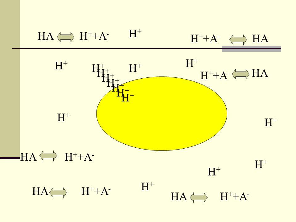 H+ HA. H++A- H++A- HA. H+ H+ H+ H+ H+ HA. H++A- H+ H+ H+ H+ H+ H+ H+ HA. H++A- H+