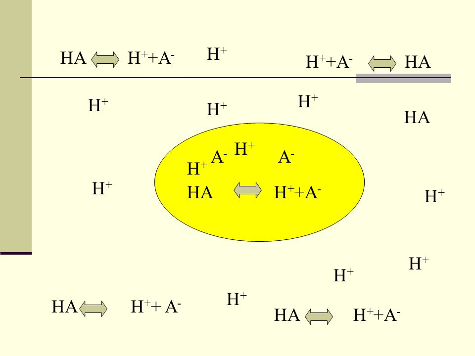H+ HA H++A- H++A- HA H+ H+ H+ HA H+ A- A- H+ H+ HA H++A- H+ H+ H+ H+ HA H++ A- HA H++A-