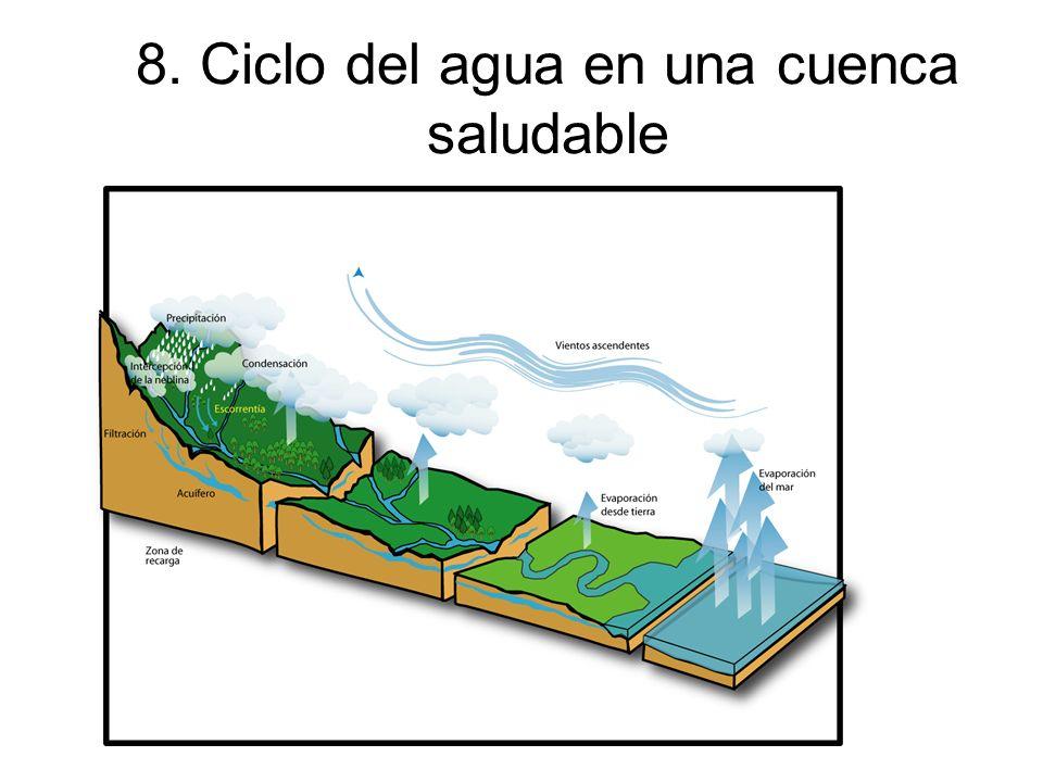 8. Ciclo del agua en una cuenca saludable