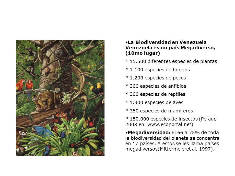 La Biodiversidad en Venezuela Venezuela es un país Megadiverso, (10mo lugar)