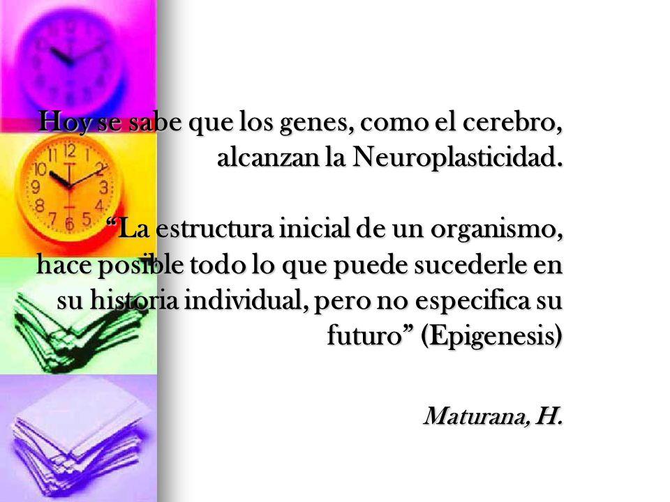 Hoy se sabe que los genes, como el cerebro, alcanzan la Neuroplasticidad.