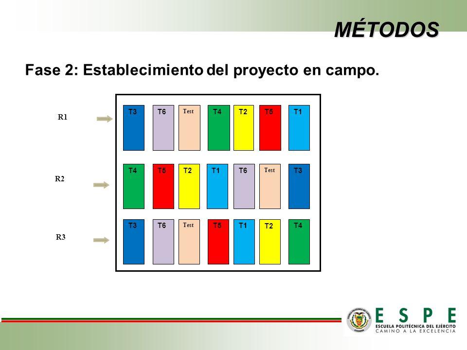 MÉTODOS Fase 2: Establecimiento del proyecto en campo. R1 R2 R3 T3 T6