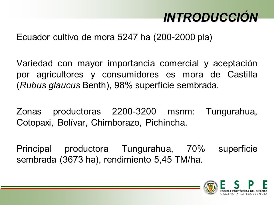 INTRODUCCIÓN Ecuador cultivo de mora 5247 ha (200-2000 pla)