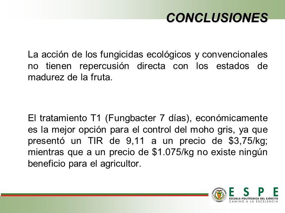 CONCLUSIONES La acción de los fungicidas ecológicos y convencionales no tienen repercusión directa con los estados de madurez de la fruta.