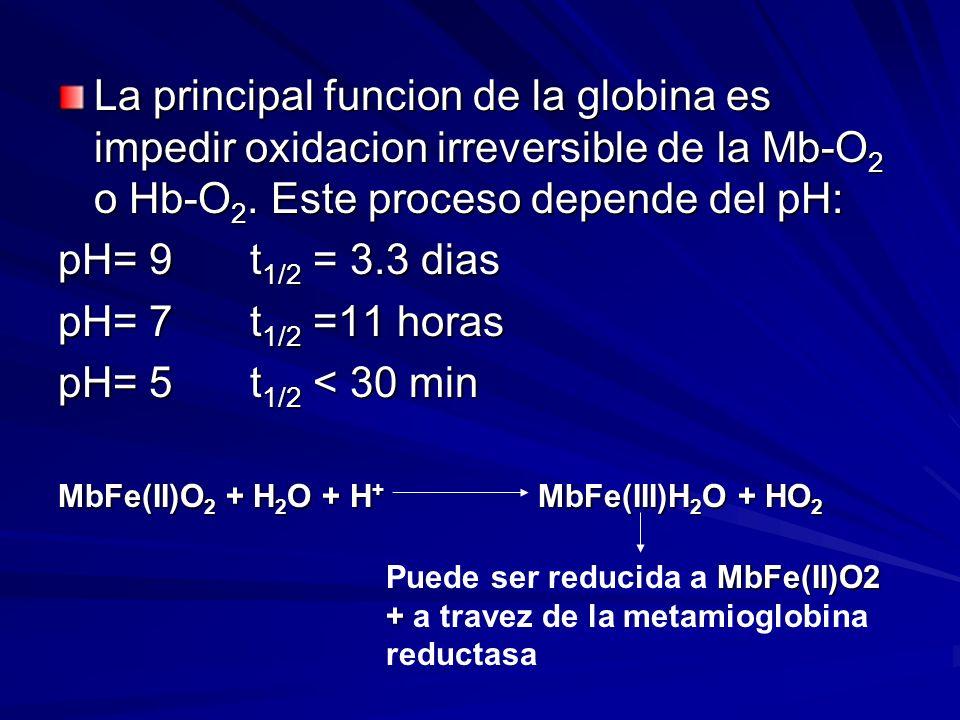 La principal funcion de la globina es impedir oxidacion irreversible de la Mb-O2 o Hb-O2. Este proceso depende del pH: