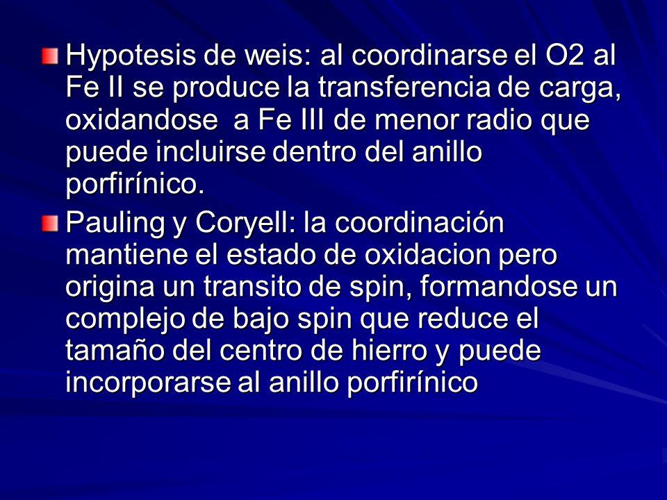 Hypotesis de weis: al coordinarse el O2 al Fe II se produce la transferencia de carga, oxidandose a Fe III de menor radio que puede incluirse dentro del anillo porfirínico.