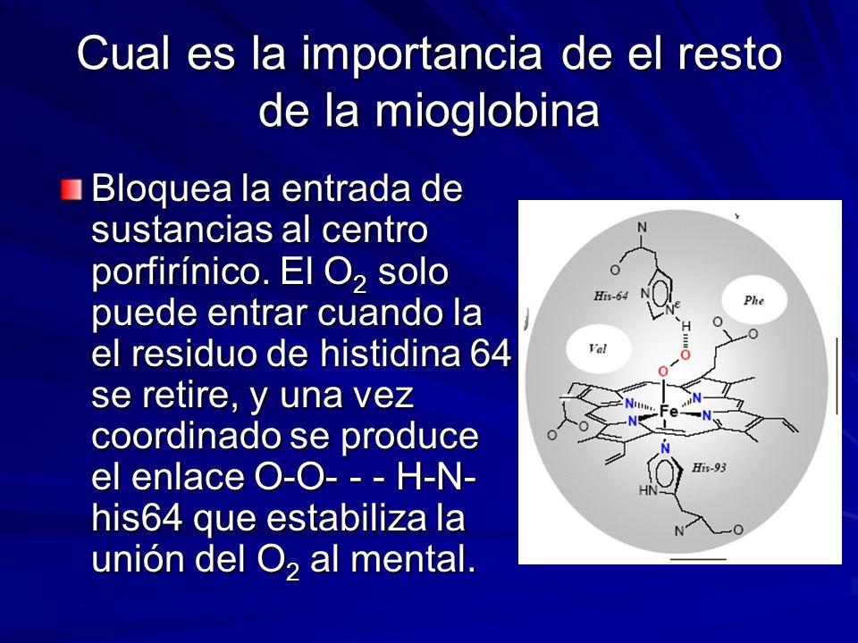 Cual es la importancia de el resto de la mioglobina