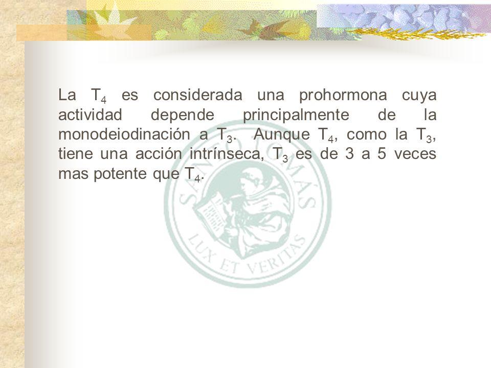 La T4 es considerada una prohormona cuya actividad depende principalmente de la monodeiodinación a T3.