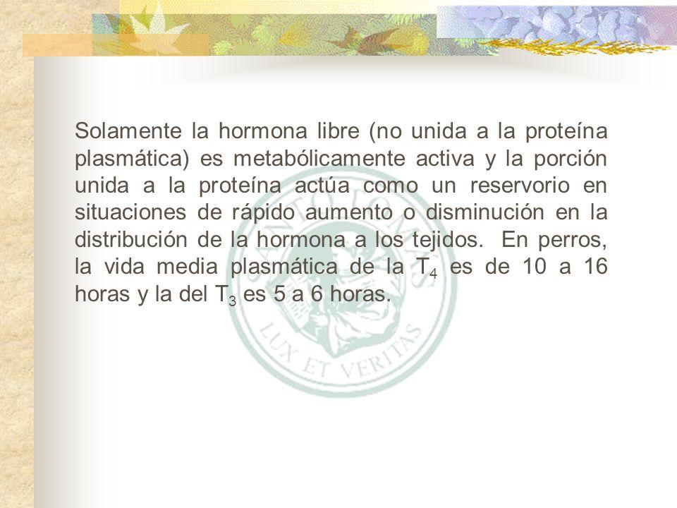 Solamente la hormona libre (no unida a la proteína plasmática) es metabólicamente activa y la porción unida a la proteína actúa como un reservorio en situaciones de rápido aumento o disminución en la distribución de la hormona a los tejidos.