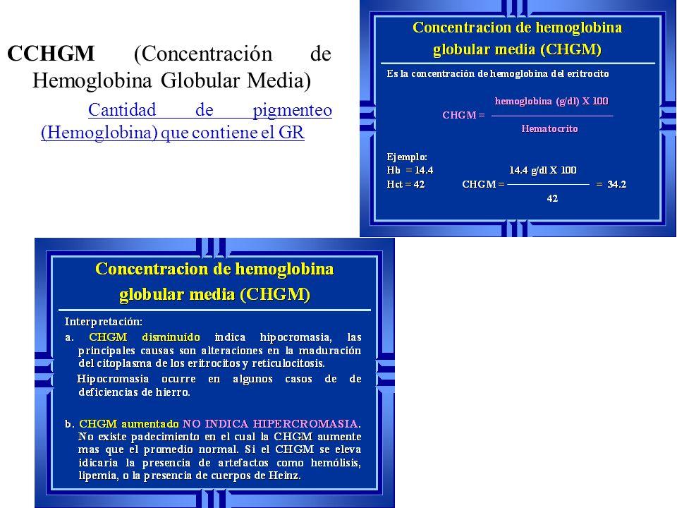 CCHGM (Concentración de Hemoglobina Globular Media)