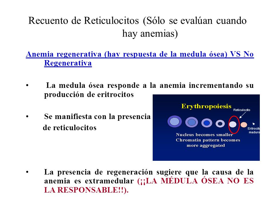 Recuento de Reticulocitos (Sólo se evalúan cuando hay anemias)