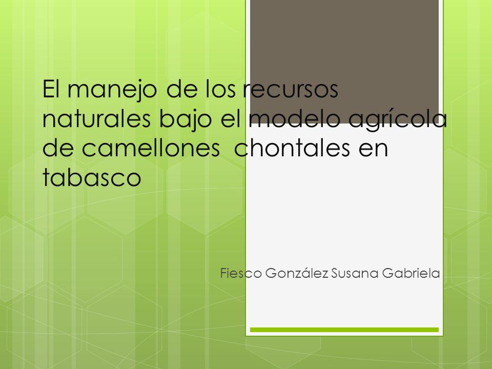 Fiesco González Susana Gabriela