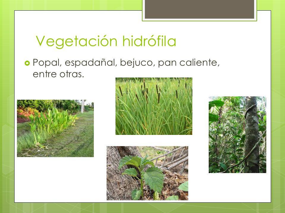 Vegetación hidrófila Popal, espadañal, bejuco, pan caliente, entre otras.