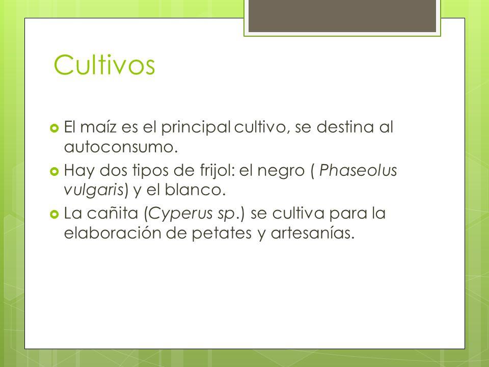 Cultivos El maíz es el principal cultivo, se destina al autoconsumo.
