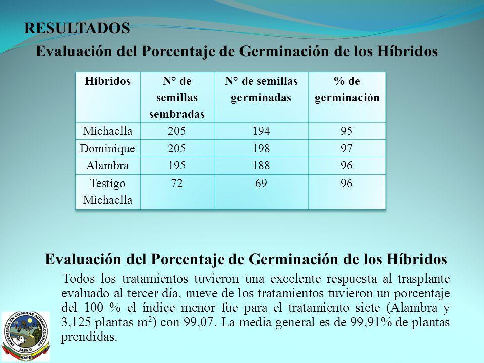 Evaluación del Porcentaje de Germinación de los Híbridos
