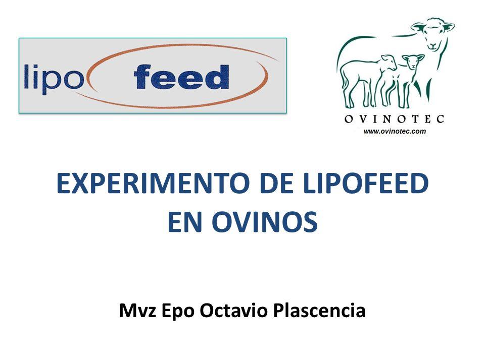EXPERIMENTO DE LIPOFEED EN OVINOS