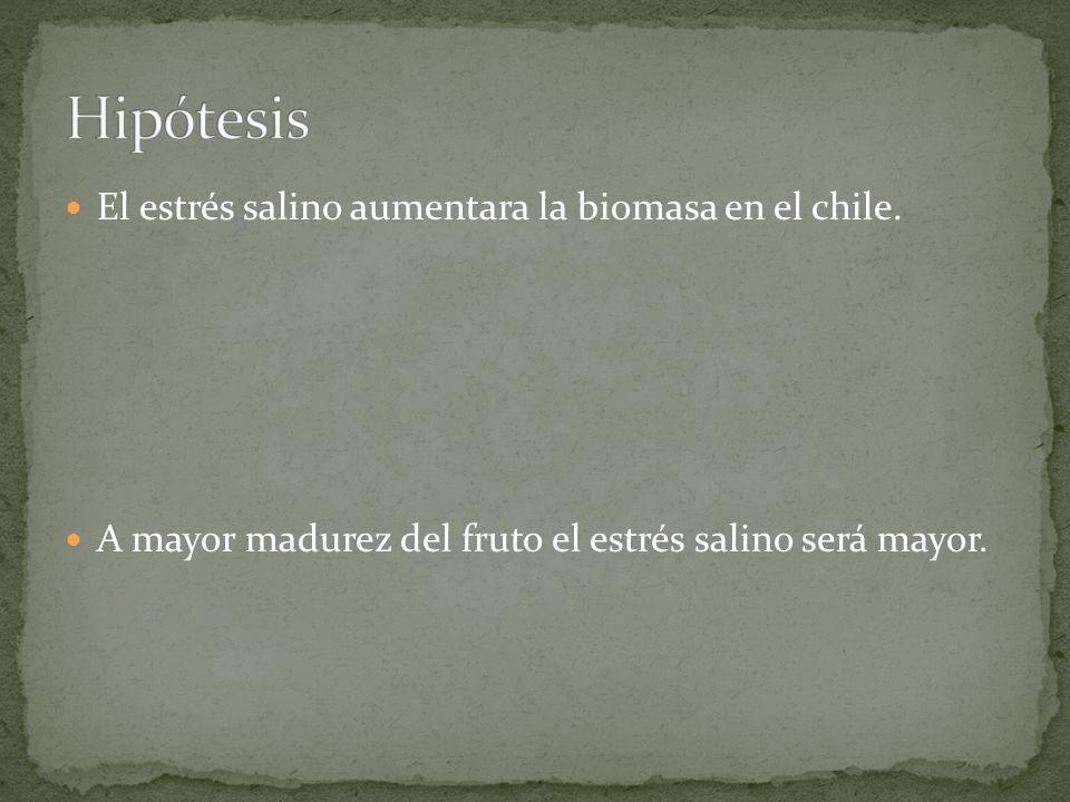 Hipótesis El estrés salino aumentara la biomasa en el chile.