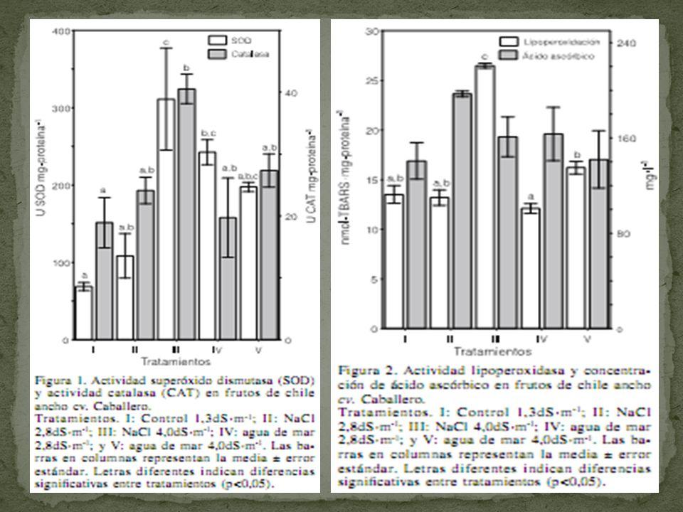 La actividad de SOD y CAT fue mayor en el tratamiento III evidenciando mayor estrés oxidativo.