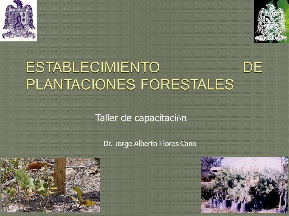 ESTABLECIMIENTO DE PLANTACIONES FORESTALES