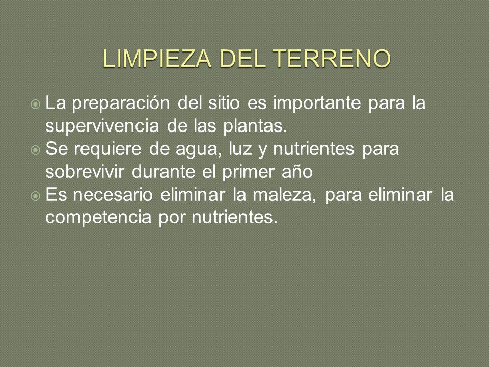 LIMPIEZA DEL TERRENO La preparación del sitio es importante para la supervivencia de las plantas.