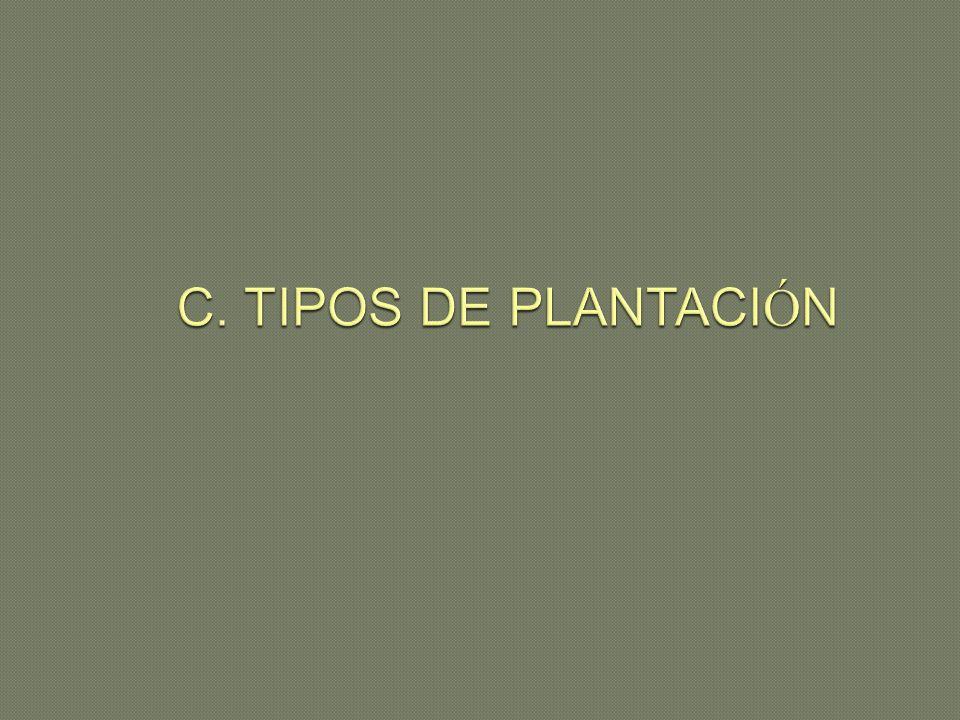 C. TIPOS DE PLANTACIÓN