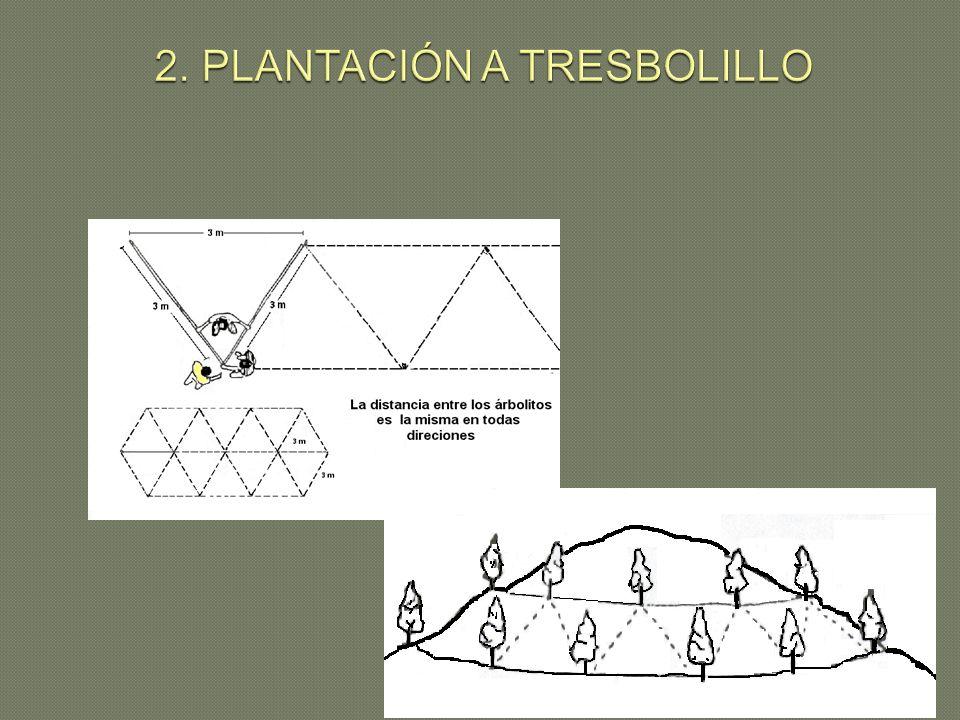 2. PLANTACIÓN A TRESBOLILLO