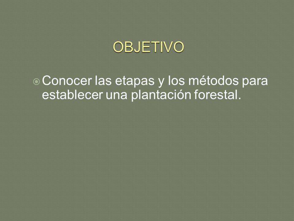 OBJETIVO Conocer las etapas y los métodos para establecer una plantación forestal.