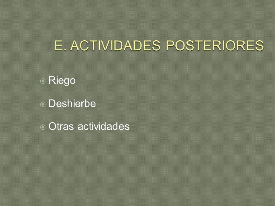 E. ACTIVIDADES POSTERIORES