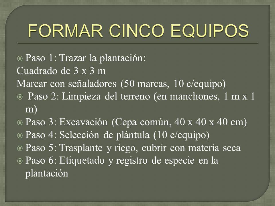 FORMAR CINCO EQUIPOS Paso 1: Trazar la plantación: Cuadrado de 3 x 3 m