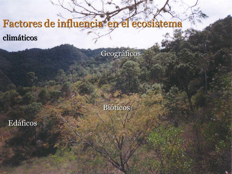 Factores de influencia en el ecosistema