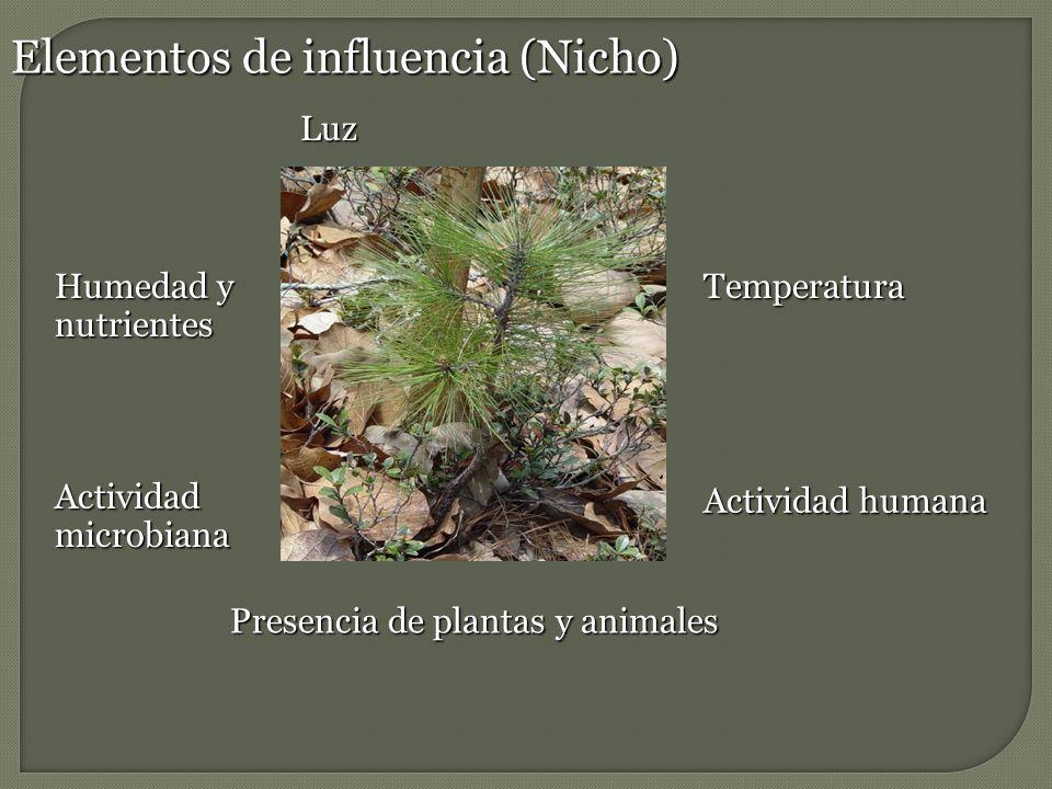 Elementos de influencia (Nicho)