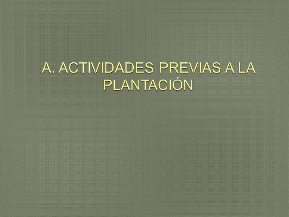 A. ACTIVIDADES PREVIAS A LA PLANTACIÓN