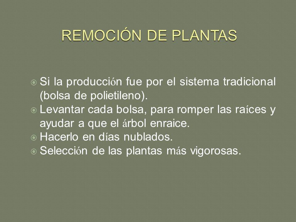 REMOCIÓN DE PLANTAS Si la producción fue por el sistema tradicional (bolsa de polietileno).