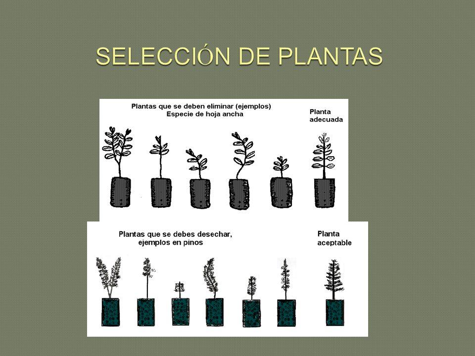 SELECCIÓN DE PLANTAS