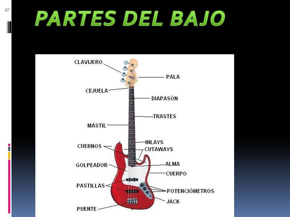 PARTES DEL BAJO