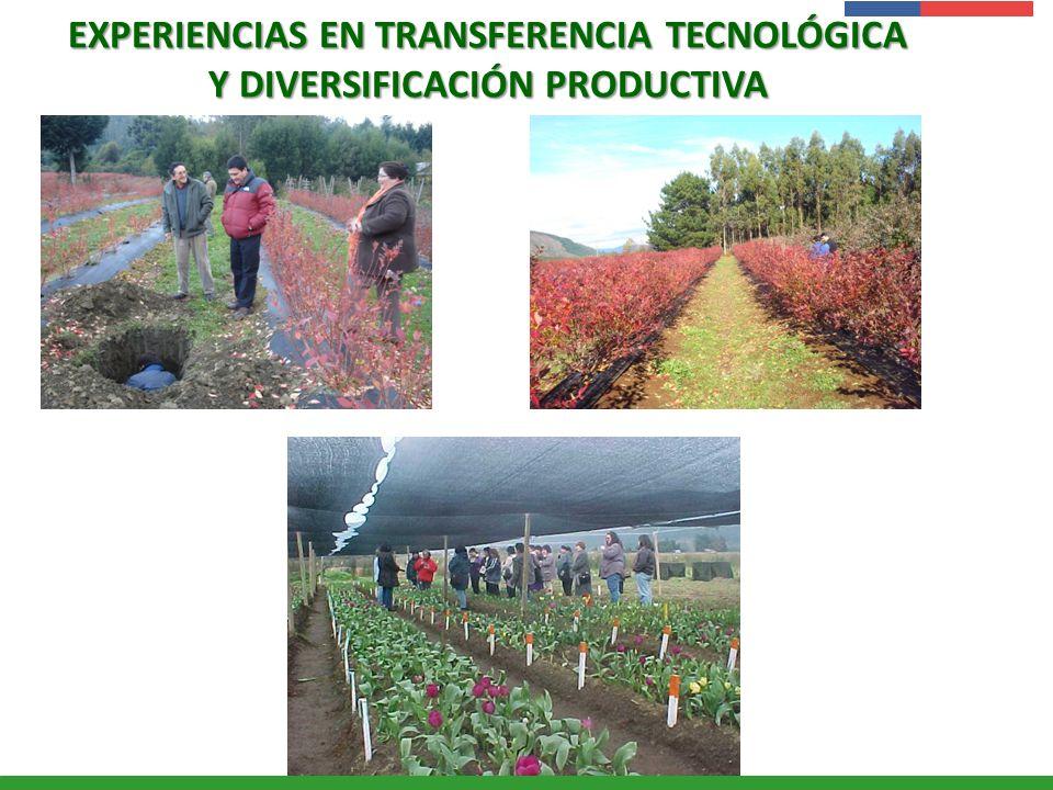 EXPERIENCIAS EN TRANSFERENCIA TECNOLÓGICA Y DIVERSIFICACIÓN PRODUCTIVA