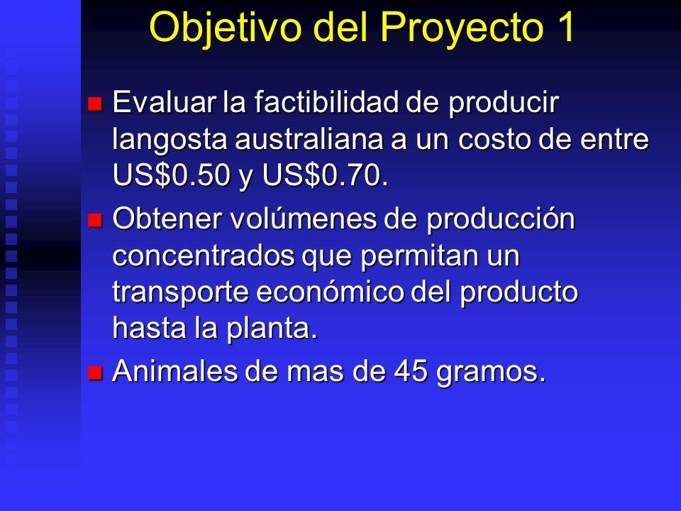Objetivo del Proyecto 1 Evaluar la factibilidad de producir langosta australiana a un costo de entre US$0.50 y US$0.70.