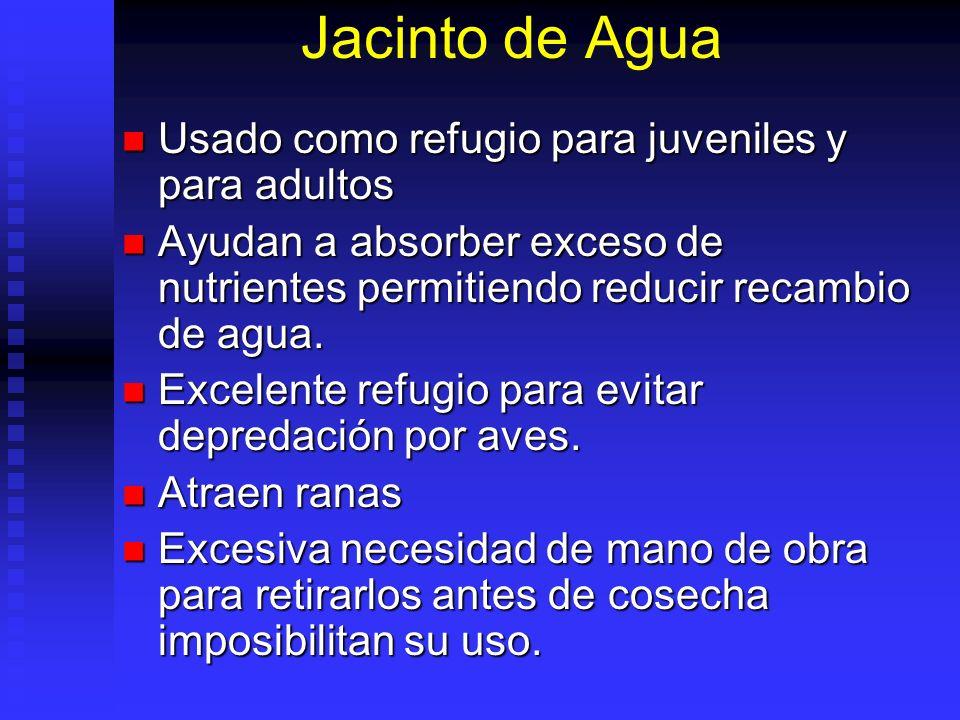 Jacinto de Agua Usado como refugio para juveniles y para adultos