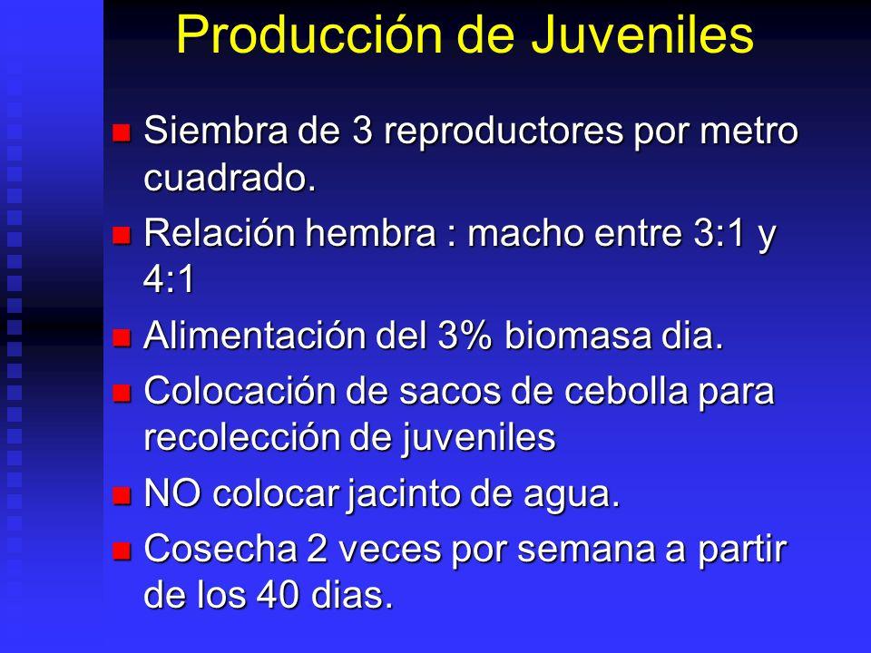 Producción de Juveniles