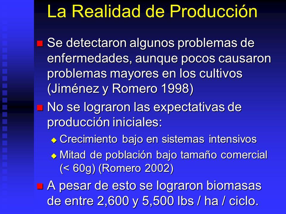 La Realidad de Producción