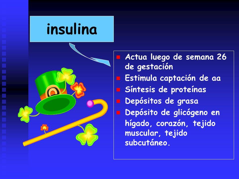 insulina Actua luego de semana 26 de gestación