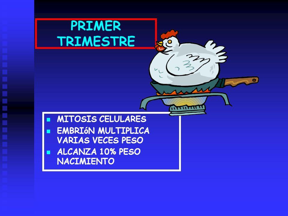 PRIMER TRIMESTRE MITOSIS CELULARES