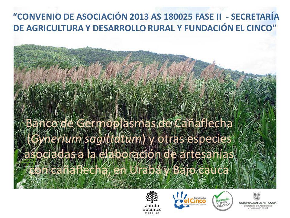CONVENIO DE ASOCIACIÓN 2013 AS 180025 FASE II - SECRETARÍA DE AGRICULTURA Y DESARROLLO RURAL Y FUNDACIÓN EL CINCO